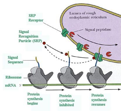 alberts et al molecular biology of the cell pdf